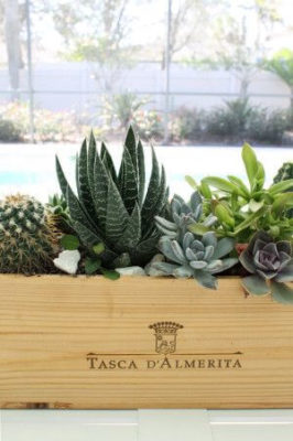 wine and succulents